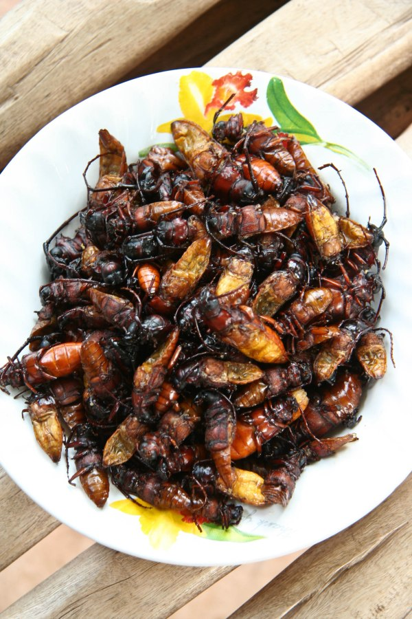 a plate of deep-fried beetles